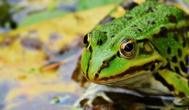 מה ההבדל בין קרפדה וצפרדע? 🐸