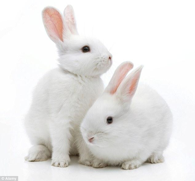 מה ההבדל בין שפן לארנב? 🐰