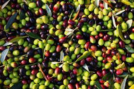 מה ההבדל בין זיתים ירוקים לזיתים שחורים? 🥗