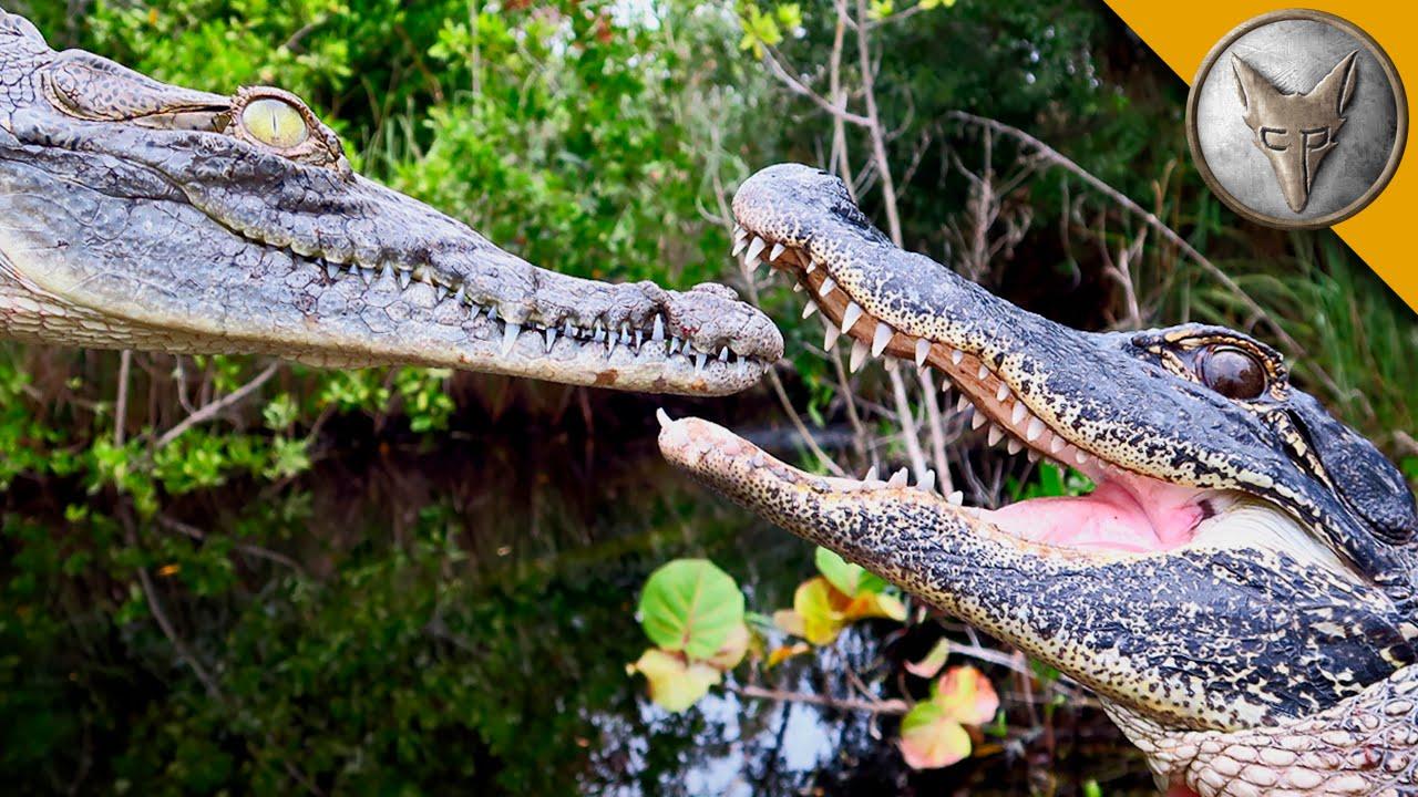 מה ההבדל בין תנין, קרוקודיל, אליגטור ותמסח?