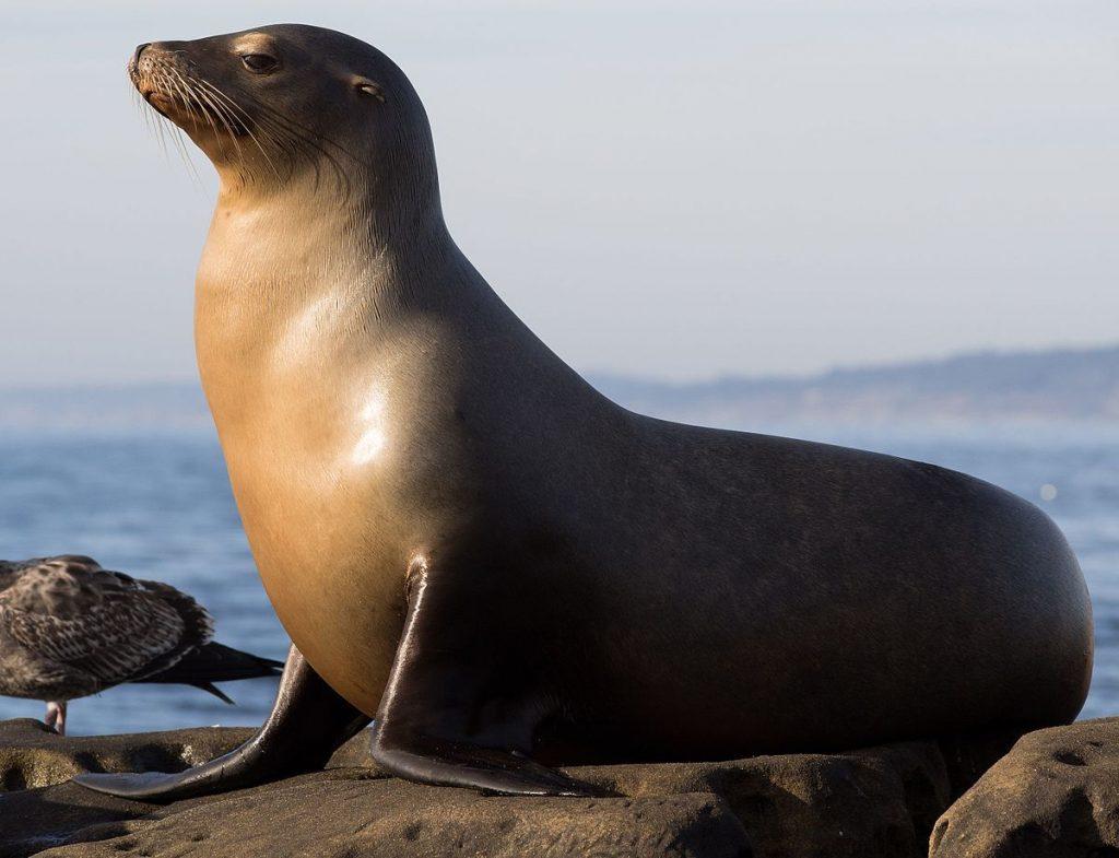מה ההבדל בין כלב-ים, אריה-ים, סוס-ים פרת-ים ופיל-ים? כנסו, יש תמונות