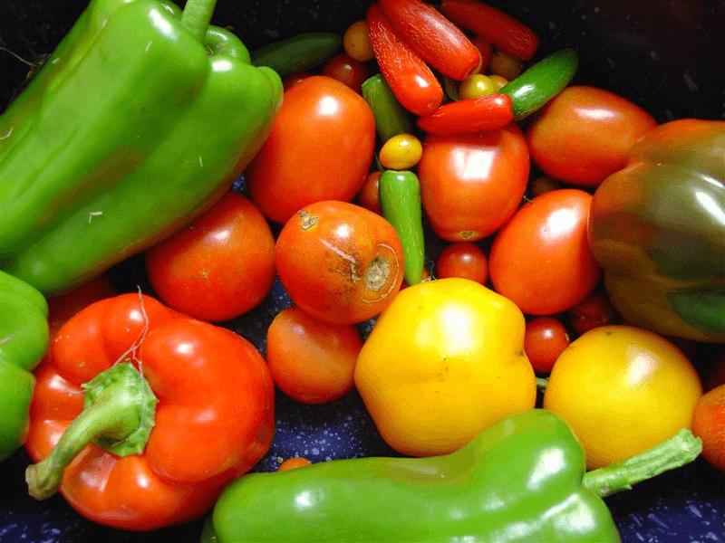 10 הבדלים בין צמחים לבעלי חיים