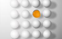 מה ההבדל בין חלבון וחלמון בביצה?