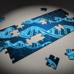 מה ההבדל בין גנים לכרומוזום?