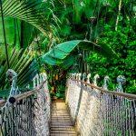 מה ההבדל בין יער לג'ונגל?