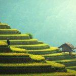 מה ההבדל בין חקלאות בעל וחקלאות שלחין?