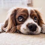 יותר מ50 שאלות מפתיעות על כלבים 🐶