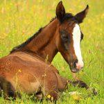 למה סוסים ישנים בעמידה?