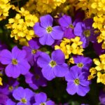 מה ההבדל בין צמח ופרח רב שנתי לעונתי?