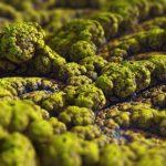מה ההבדל בין עובש לפטריות?
